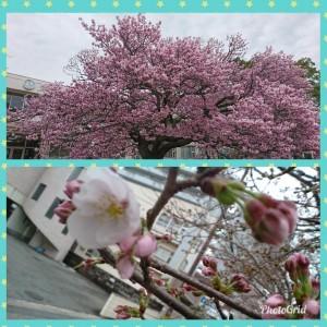 PhotoGrid_1521515848397