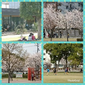 PhotoGrid_1522304086386